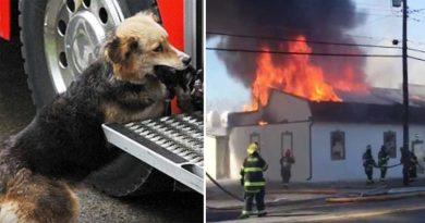 Gdy strażacy uratowali rodzinę z pożaru, ujrzeli przestraszonego psa, niosącego coś w pysku do ich wozu