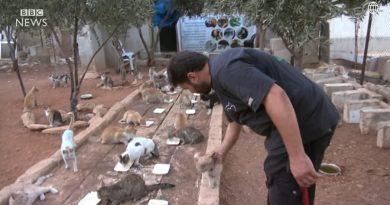 Podczas gdy wszyscy inni uciekają przed wojną z Aleppo, on został, żeby pomagać porzuconym kotom