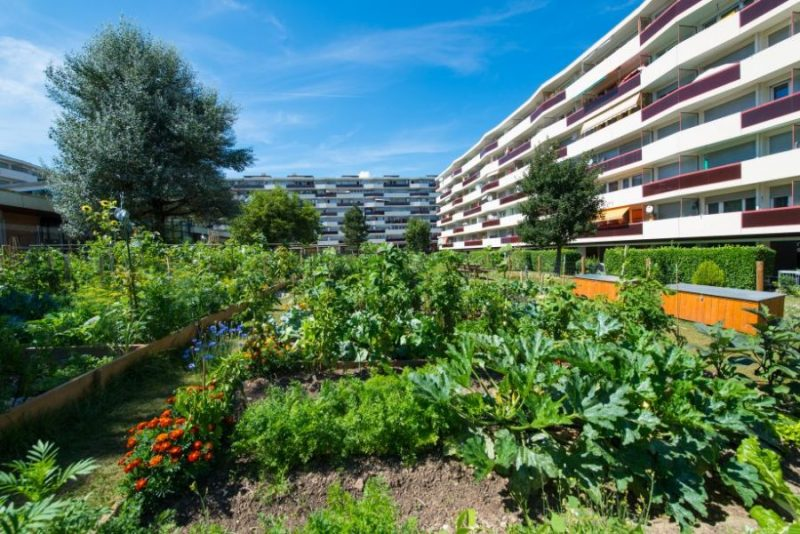 Potagers-urbains-2