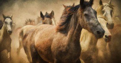 Nasza wspólna bitwa o polskie konie