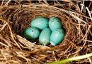Okres lęgowy ptaków – szansa dla drzew