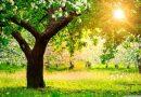 Pięć sposobów na wiosenne alergie