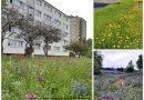 Łąki kwietne  w Warszawie – mniej odgłosów kosiarek, więcej bioróżnorodności, kolorów, zapachów, motyli, owadów, pszczół i ptaków.