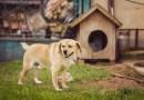 Zakaz hodowli zwierząt na futra i trzymania psa na łańcuchu
