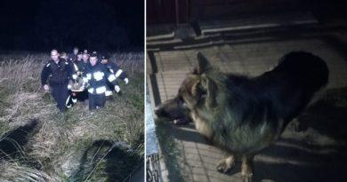 Pies bohater, zaprowadził policjantów do nieprzytomnego pana