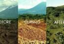 Skórki pomarańczowe zregenerowały las w kostarykańskim parku narodowym