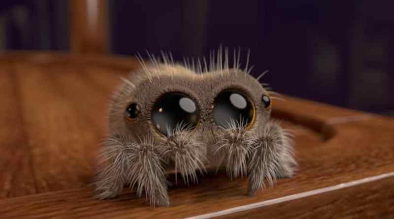 Poznajcie Lucasa – pająka, który szybko wyleczy was z arachnofobii!