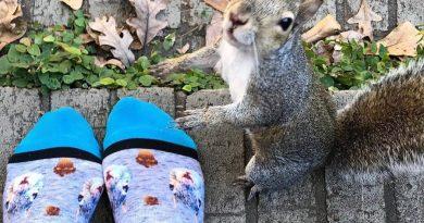 Uratowana wiewiórka od 8 lat regularnie odwiedza swoich wybawców