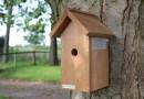 Wieszając budki lęgowe pomagamy ptakom