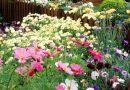 Hortiterapia, czyli terapia ogrodem – dla starszych, niepełnosprawnych, dzieci i cierpiących na nadmierny stres