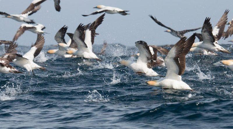 Diody LED zmniejszają śmiertelność morskich ptaków
