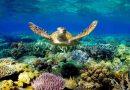 Wielka Rafa Koralowa zdrowieje, optymistyczne wieści od badaczy