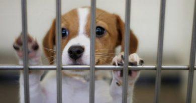 Schronisko dla zwierząt w Bielsku-Białej dostało w spadku 100 tys. dolarów
