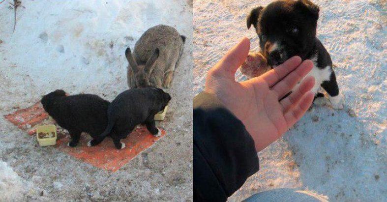Królik zaopiekował się szczeniakami