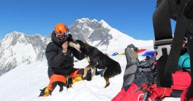 Bezpański pies który dołączył do wyprawy, zdobył siedmiotysięczny, himalajski szczyt
