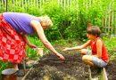 Spacery i praca w ogrodzie skutecznie zapobiegają chorobom serca
