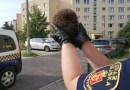 Ekopatrol straży miejskiej uratował jeża, który zaklinował się między sztachetami płotu
