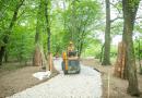 Wrocław wprowadza wyjątkową ochronę drzew w mieście. Można? Można!