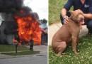2-letni pit bull uratował głuchego chłopca z płonącego domu