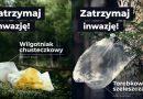 """""""Zatrzymaj inwazję"""". Doskonała przeciwśmieciowa kampania Karkonoskiego Parku Narodowego"""