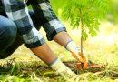 Powstała ekologiczna wyszukiwarka,  korzystając z niej pomagasz sadzić drzewa na całym świecie