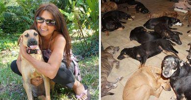 Kobieta przygarnęła i uratowała życie 97 psów przed huraganem Dorian, który szalał na Bahamach