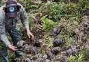 Ponad trzystu nowych mieszkańców Galapagos