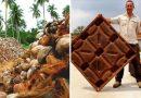 Ognioodporne łupiny orzecha kokosowego mogą zastąpić drewno i uratować miliony drzew