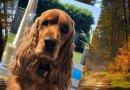 Katarzyna Szulc oferuje 15 tys. zł nagrody za odnalezienie swojego psa
