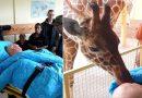Poruszające pożegnanie żyrafy z umierającym pracownikiem ZOO