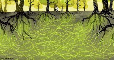 Drzewa wiedzą jak kochać, przytulać, a nawet dbać o siebie nawzajem, niemal jak małżeństwo. Naukowcy to udowodnili