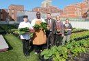 Ogródek na szpitalnym dachu w Bostonie zapewnia rocznie ponad 3 tysiące kilogramów ekologicznych warzyw dla pacjentów