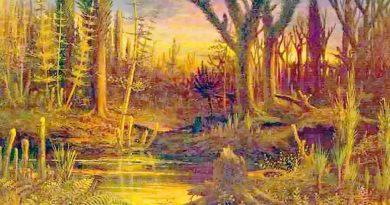 Korzenie drzew w najstarszym lesie świata w Cairo koło Nowego Jorku mają 385 milionów lat