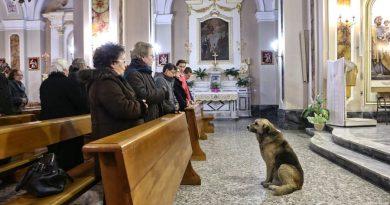 Ksiądz z Olsztyna zamierza podczas mszy przedstawić wiernym psa do adopcji