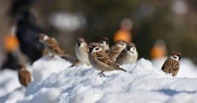Ornitolog z Bydgoszczy podpowiada, jak mądrze dokarmiać ptaki