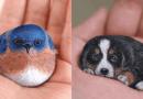 Artystka przerabia zwyczajne kamienie w urocze figurki zwierząt, które mieszczą się na dłoni