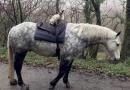 Kot wraz z koniem wspólnie przemierzają okolice North Devon w Anglii