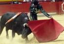 120 ocalonych byków.  Odwołane corridy w Hiszpanii podarowały życie setkom zwierząt