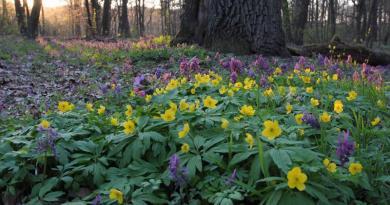 """Zwarte korony drzew są jak """"kapsuła czasu"""", chronią runo leśne przed zmianami klimatu"""
