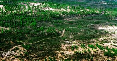 Była jedną z największych pustyń w Chinach. Za sprawą mieszkańców, dziś porasta ją las