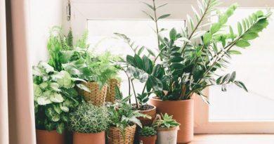 Rośliny oczyszczające powietrze. Które gatunki warto mieć w domu?