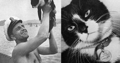 """""""Niezatapialny Sam"""" – kot, który przeżył zatopienie 3 statków"""