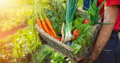 Krakowska farma oferuje paczki warzyw, zgodne z cyklami Natury a nie życzeniami klientów