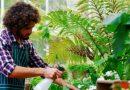 Koniec z uschniętymi kwiatami – aplikacja, która zadba o zieleń w twoim domu