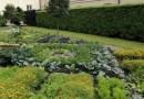 Dywan do zjedzenia w Ogrodzie Botanicznym UW