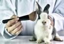 Chiny kończą z testowaniem kosmetyków na zwierzętach. To przełom dla wielu marek