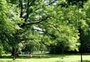 We Wrocławiu drzewa stają się kluczowym dobrem