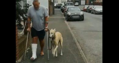 Mężczyzna złamał nogę. Współczujący pies zaczął spontanicznie naśladować swojego pana