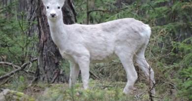 Leśniczy od lat widywał niezwykłe zwierzę, ale dopiero teraz udało się uchwycić je na zdjęciu