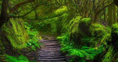 las elfów